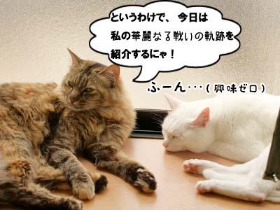 cat3889.jpg