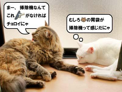 cat3892