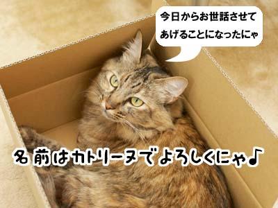 cat3894