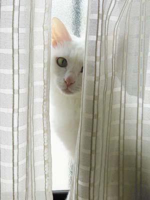 cat3901