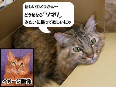 cat3902