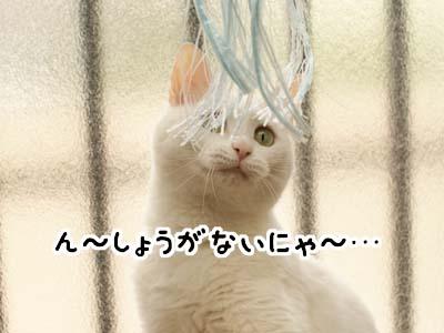 cat3911