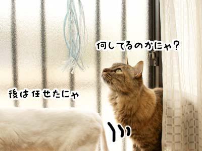 cat3915