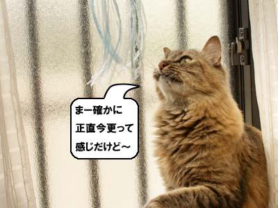cat3916
