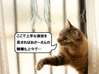 cat3917
