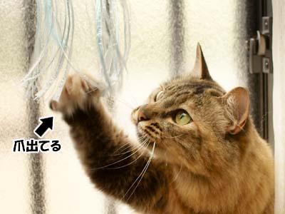 cat3919