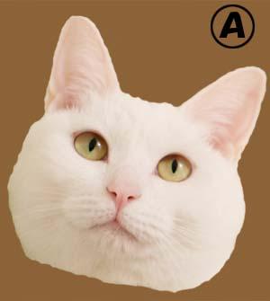 cat3921