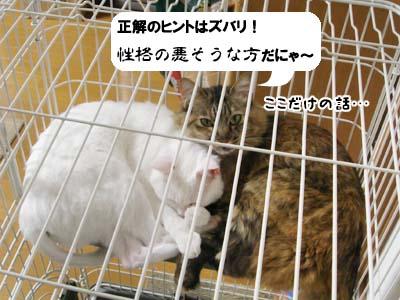 cat3922