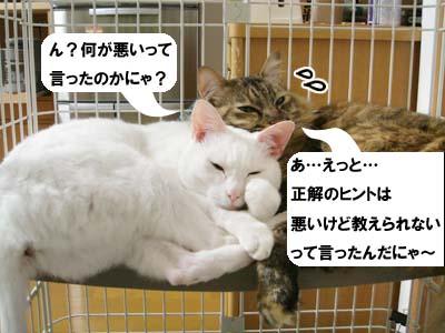 cat3924