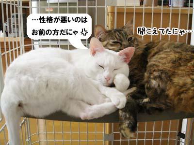 cat3925