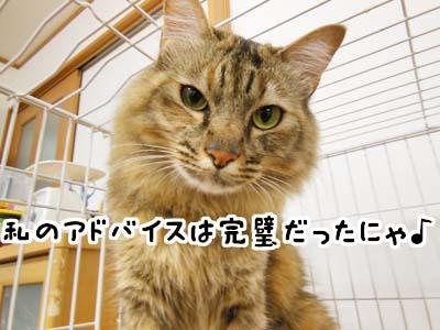 cat3926