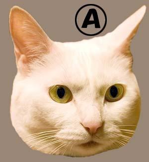 cat3927