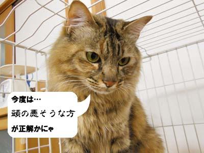 cat3929
