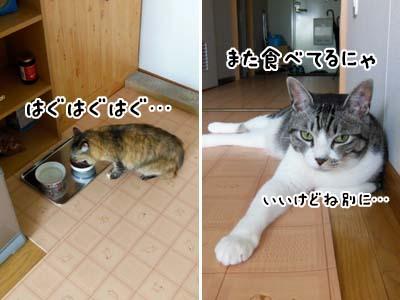 cat3932