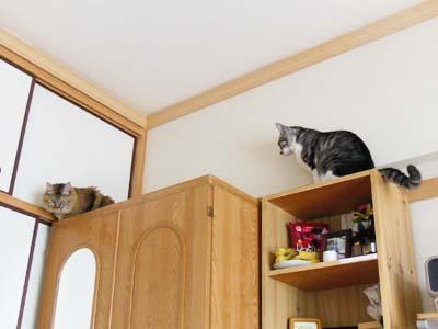 cat3933
