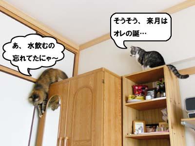 cat3934