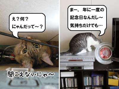 cat3935