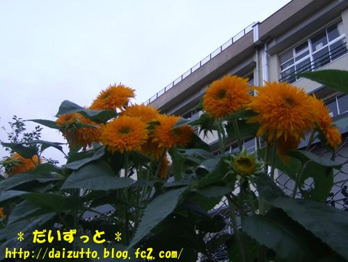 20120731a