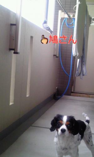 120425_0903+010001_convert_20120425130951.jpg