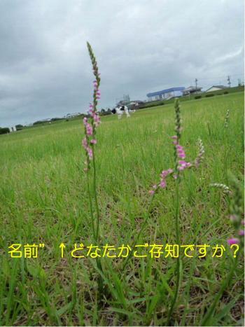 dc063004+・コ・具セ滂スー1_convert_20120630225207