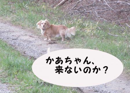 おっさん犬