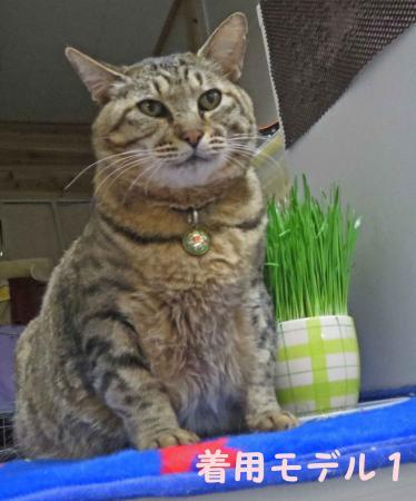 おっさん猫もかわいらしく