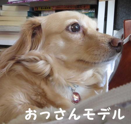 犬はそれなりに・・・