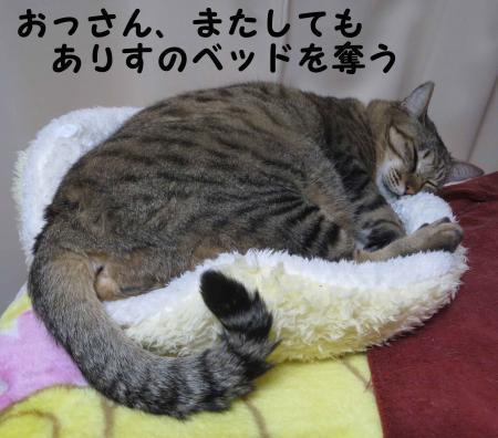 ベッドを奪うおっさん猫