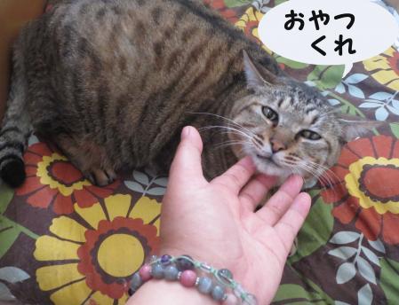 部屋とおっさん猫と私