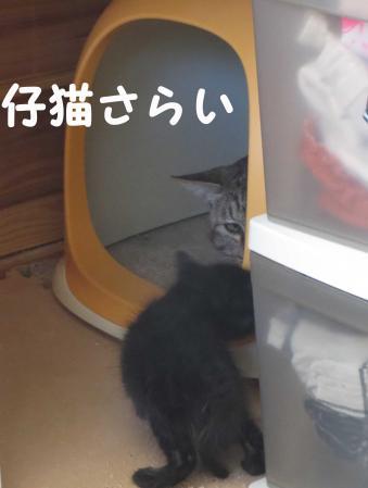 子猫を誘う
