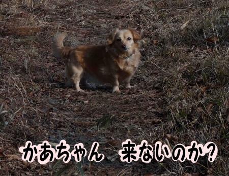 不安になるおっさん犬