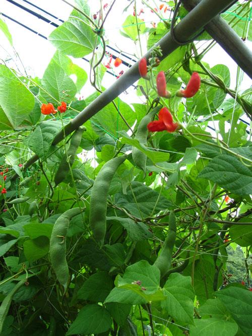 緑の家庭菜園