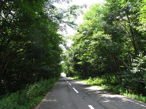 緑んトンネル