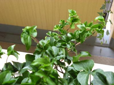 green0118_2014_2.jpg