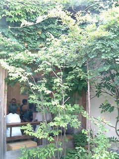 kuruminoki_0816_2012_4.jpg