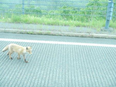 北海道の旅09