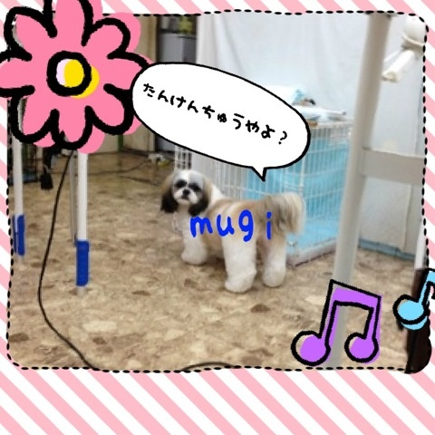 image_20121120223251.jpg