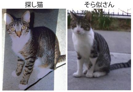 cats_01162013-01.jpg