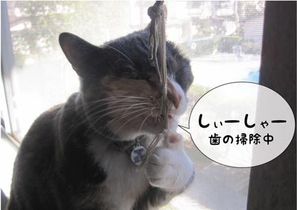 coz_01162013-01.jpg