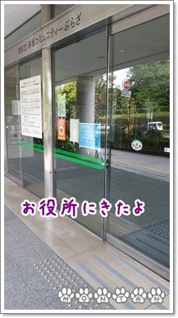 20130501_133217.jpg