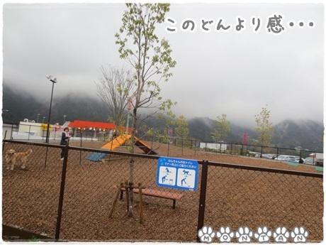 IMG_7074.jpg