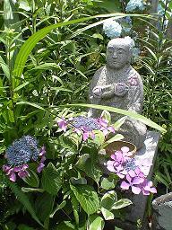 「福生寺」 のあじさい