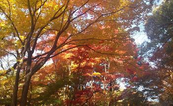 東山の紅葉1