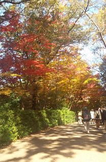 紅葉を歩く