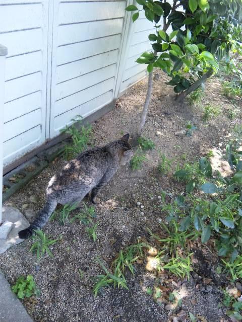 垂水 野良猫