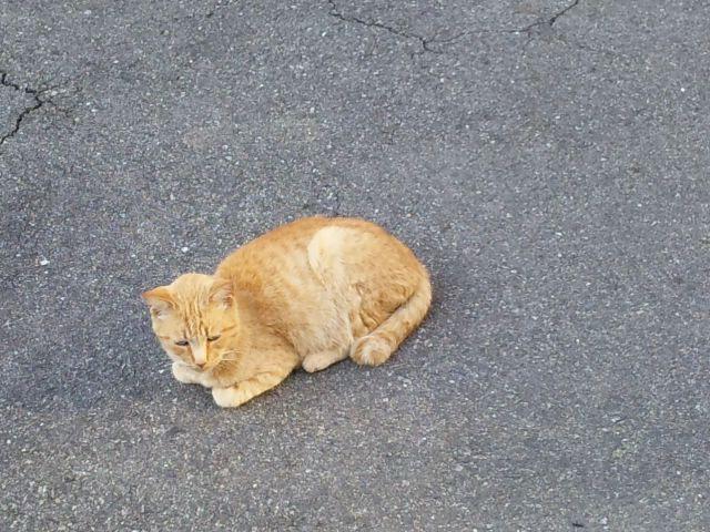 垂水区駐車場内猫
