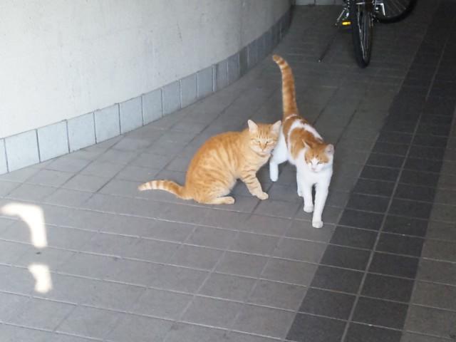 市営住宅の猫
