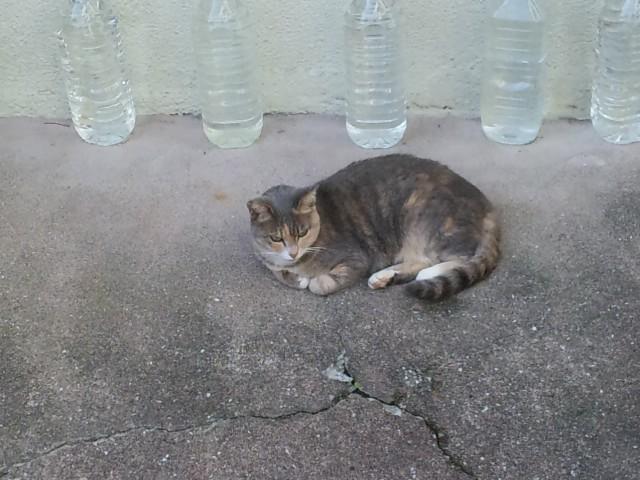 猫 ペットボトル