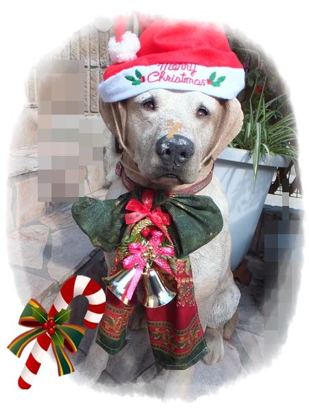 26-11犬サンタさん
