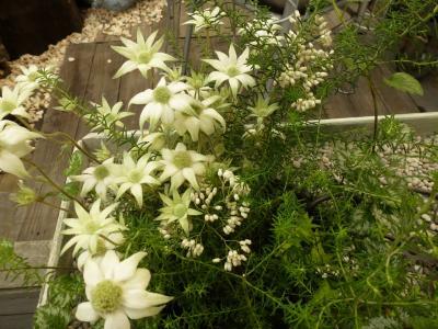 ガーデン花④ 5.14